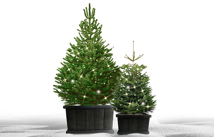 Complete Christmass tree for outside